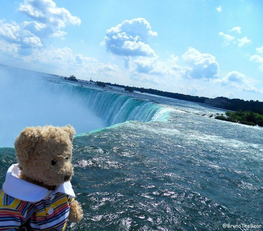 Everything Is Pawsibble: Bruno The Bear Travelling The World