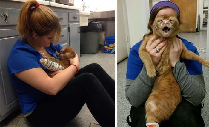 Cat Rescued From Fire Now Nurses Other Animals In Pet Hospital