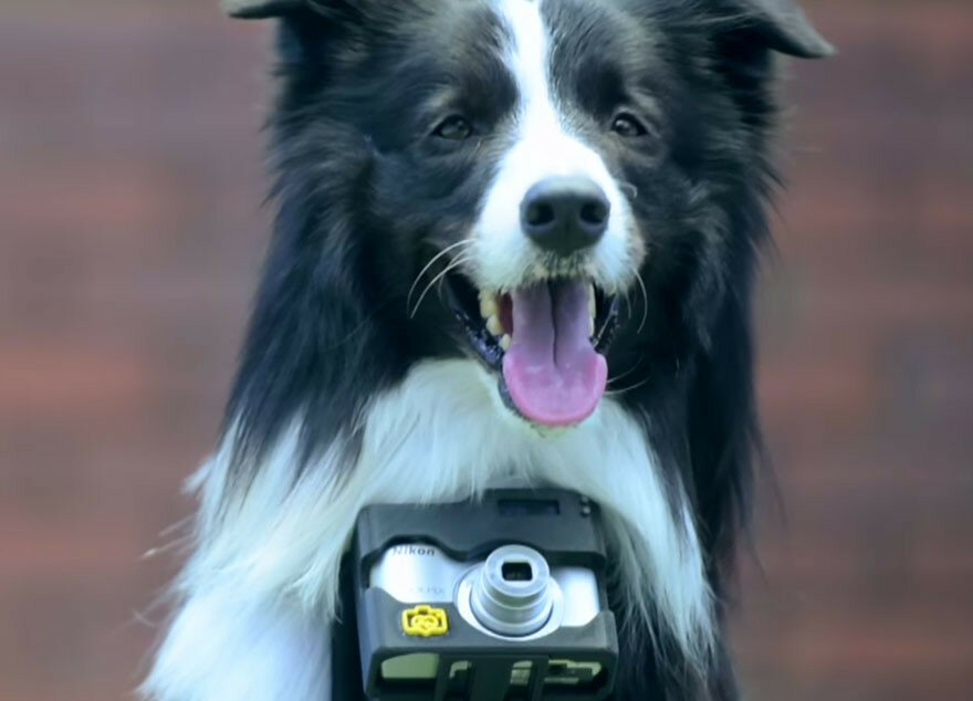 The 'Phodographer' Dog Uses Heart Rate Monitor That Snaps Pics