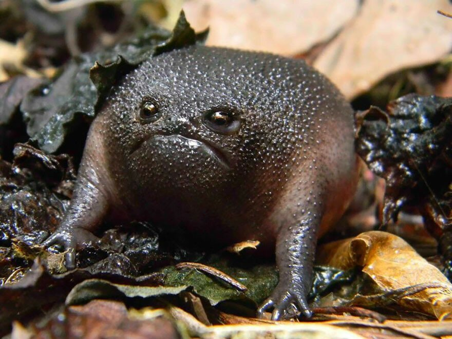 30 Of The Coolest Frogs And Toads In The World