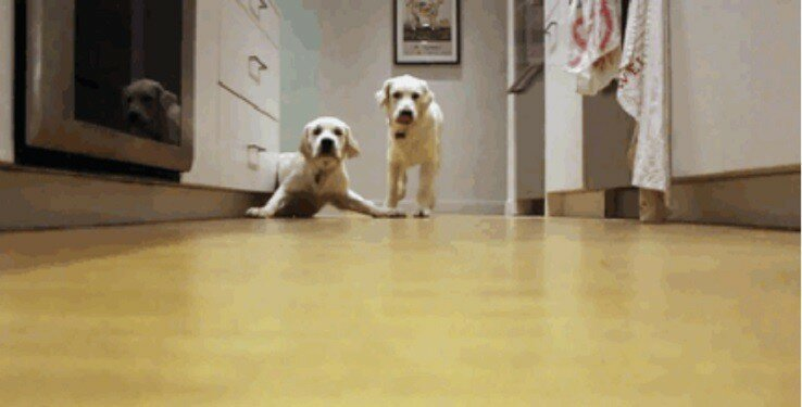 Puppies Running For Dinner In 9-Month Timelapse