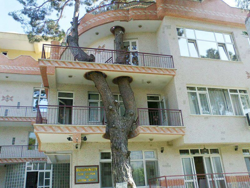 17 Clever Buildings Whose Architects Refused To Cut Down Local Trees