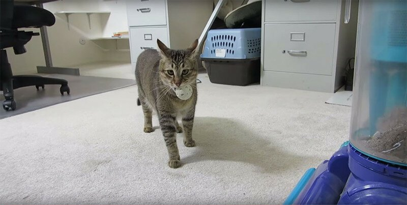 Cat Feeding Machine That Requires His Kitty To Hunt For Food