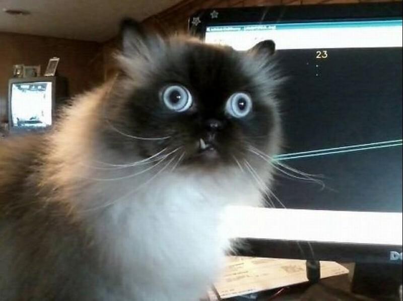 An All-Cats Newsletter