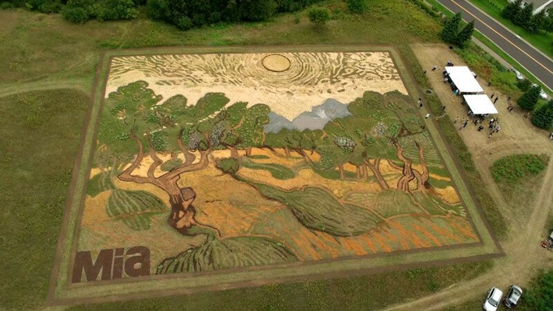 Artist Plants 1.2-Acre Field To Recreate Van Gogh's 1889 Painting 'Olive Trees'