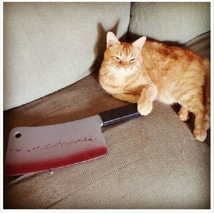 17 Cats Who Are Obviously Planning A Murder