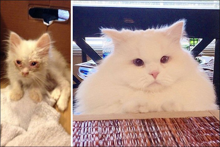 Kitten Found On Roadside Surprises Hoomins With Extreme Fluffiness