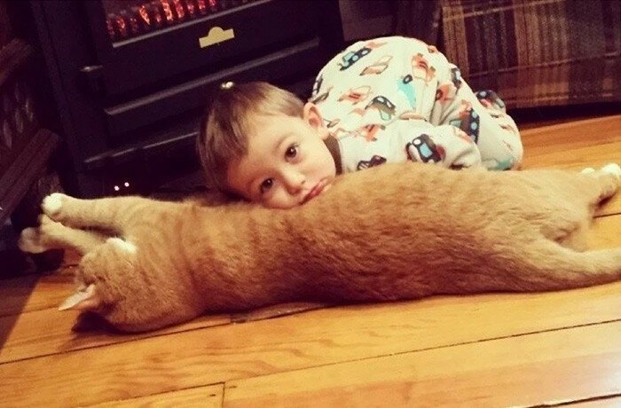 Unwanted Cat Becomes This Little Boy's Guardian, Following Him Everywhere