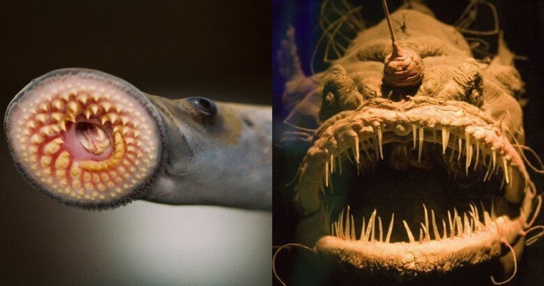 15 Creepy Animals That Will Freak You Out