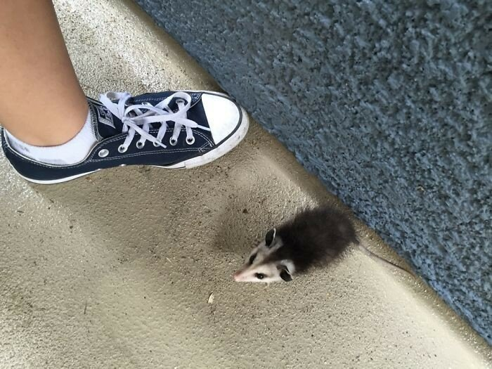 Saving Mighty The Possum