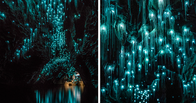 Glow Worms Turn New Zealand Cave Into Starry Night