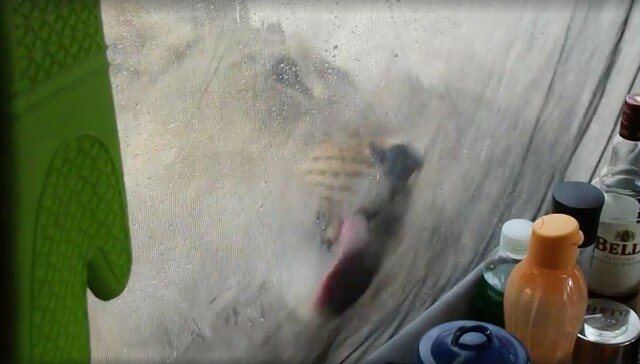 Woman Wakes Up To Lions Licking Water Off Her Tent