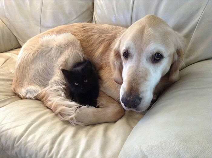 Dog Lost His Cat To Cancer, So They Got Him A New Best Friend