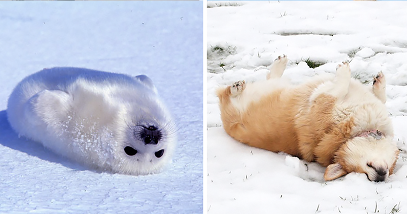 Seals Are Actually Ocean Puppies