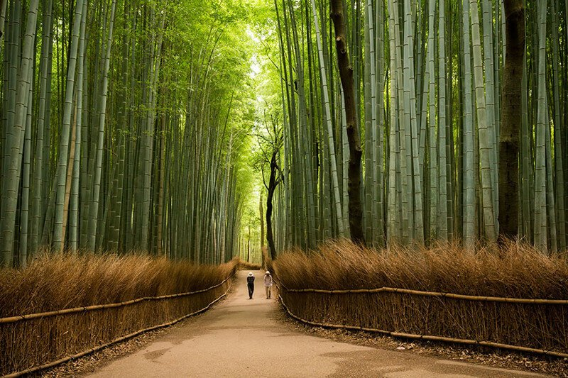30 Reasons Why You Should Visit Japan