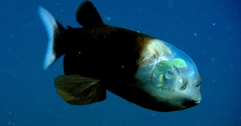 15 of the Strangest Animals Living In The Ocean