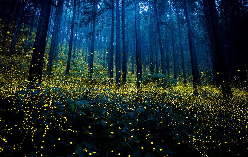 Surreal Photos Of Fireflies From Japan's 2016 Summer