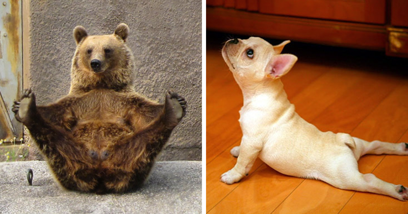 15 Animals That Do Yoga Better Than You