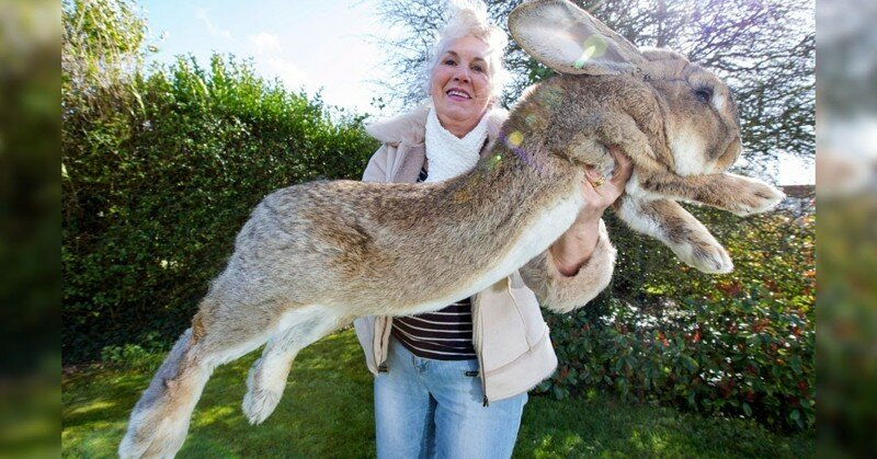 15 Abnormally Large Animals That Are Actually Real