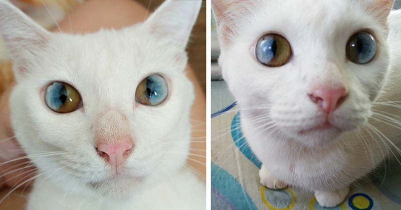 This Cat's Eyes Have A Whole Universe Inside