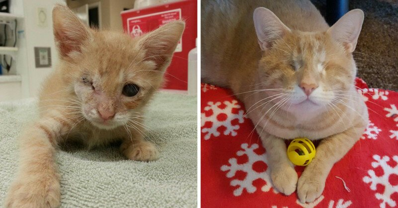 We Saved A One-Eyed Cat, And He Saved Us Right Back!
