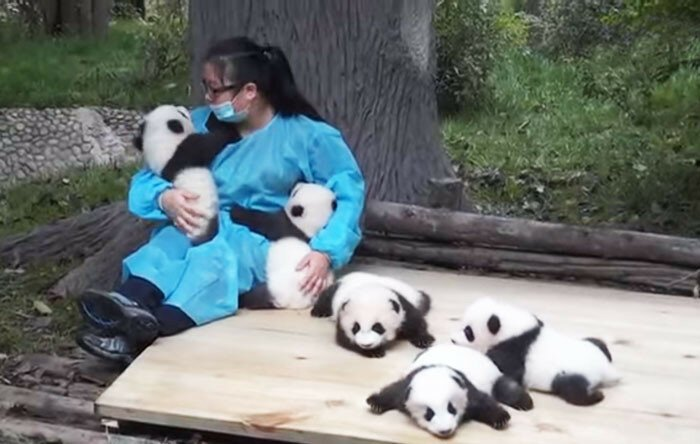 The World's Best Job: This Woman Hugs Pandas And Is Paid $32,000