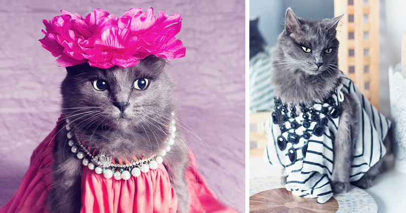 This Kitty Was Found Half Dead But Now She Lives Her Life As A Fabulous Fashionista