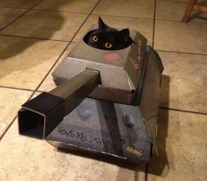 This Company Makes Cardboard Tanks, Planes And Houses For Cats, And Your Master Needs Them Right Meo