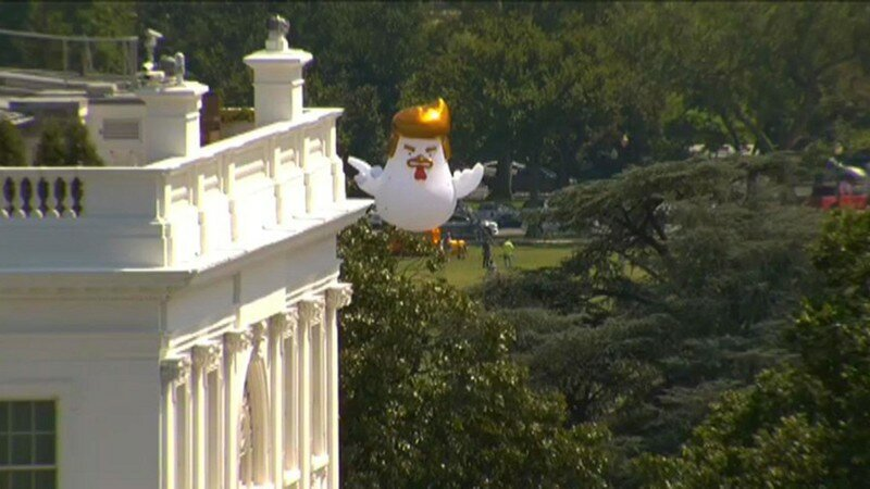 Giant Inflatable Chicken That Looks Like Trump Just Landed Near The White House