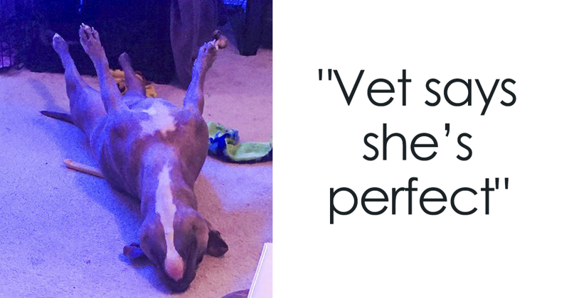 Meet Leela, The Weirdest Pit Bull In The World Who Acts So Strangely Even Vets Can't Explain It