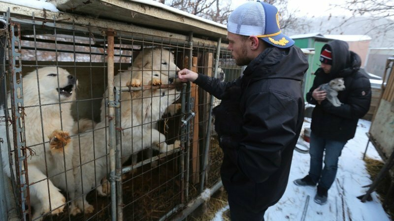 US Olympic Skier Gus Kenworthy Rescued 90 Dogs From Korean Dog Meat Farm