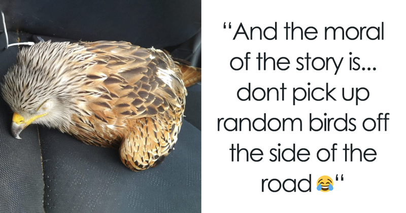 Man Rescued Injured Bird, And Now He Probably Wishes He Hadn't