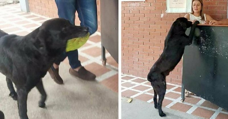 After Seeing Students Use Money To Buy Food, Dog Uses Leaves To Get Some Too