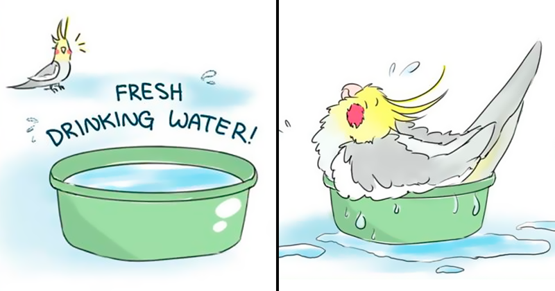 Artist Draws Comics About Her Pet Bird And They're Too Positive
