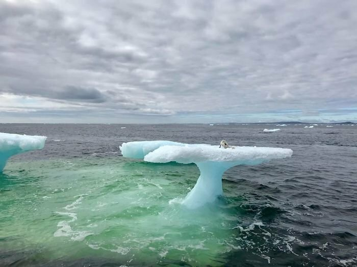 Fishermen Think They Found A Seal Floating On An Iceberg, Then They Take A Closer Look