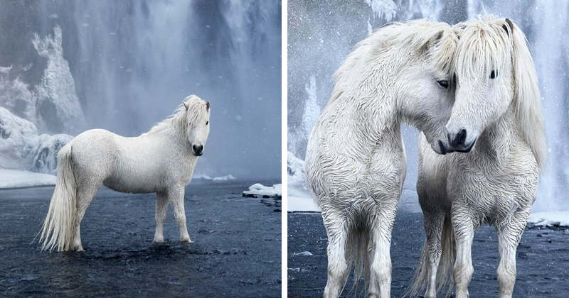 Fairytale-Like Pictures Of Horses Living In Extreme Iceland Conditions