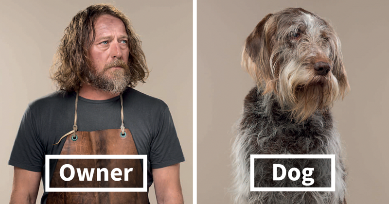 Photographer Puts Dogs And Their Owners Side By Side, And The Resemblance Is Uncanny