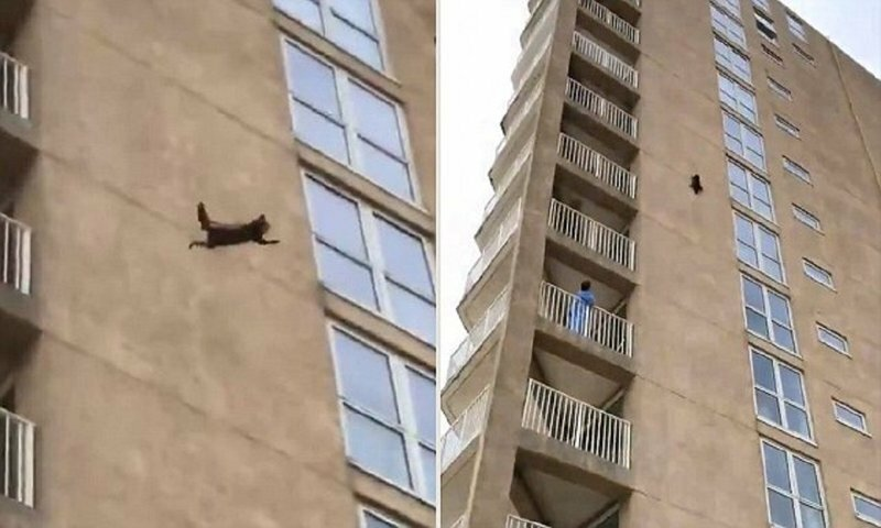 Heart-stopping moment a raccoon scales nine stories of a New Jersey apartment