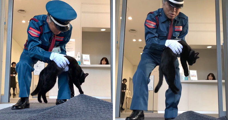 Two Cats In Japan Have Been Trying To Sneak Into A Museum For Years