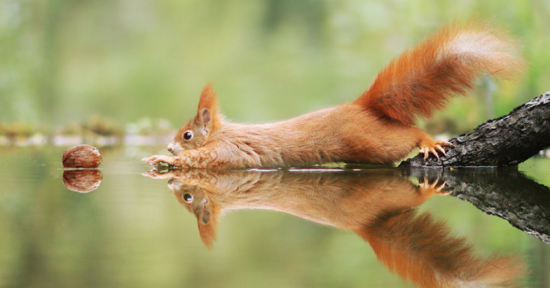 30 Amusing Wildlife Photos By Award-Winning Austrian Photographer