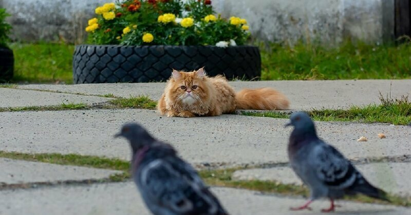 A Hunting Story Full Of Drama: A Day In The Life Of Barsik The Cat