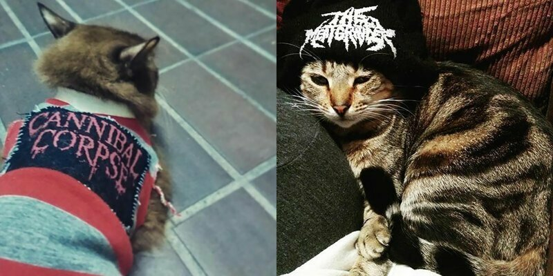 Nothing To See Here, Just Some Photos Of Cats Wearing Metal Battle Vests
