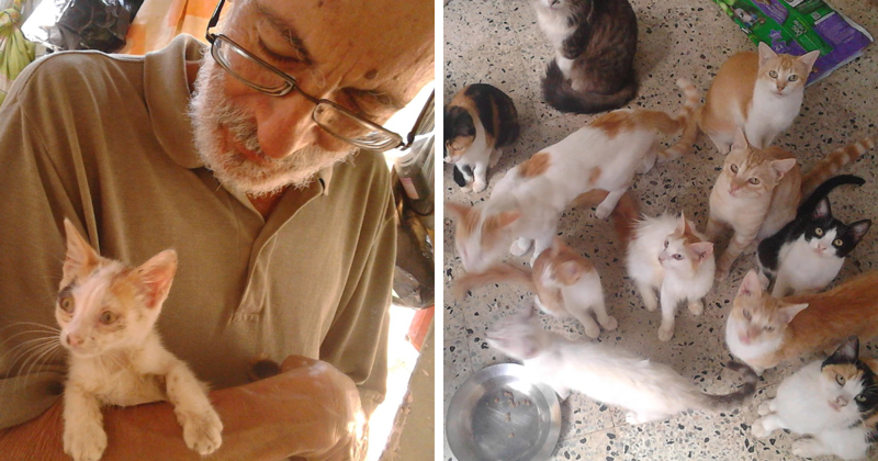 This Family Sanctuary Is Giving Abandoned Cats A Loving Home
