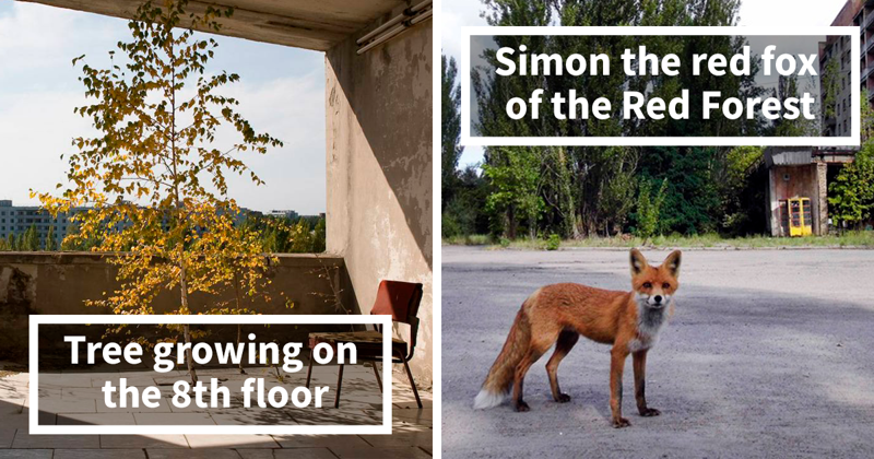 30 Photos Of Nature Winning The Battle Against Civilization In The Exclusion Zone Around Chernobyl