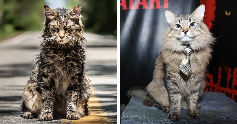 Stephen King's Pet Sematary Remake Had Cats From Shelters Who Were Trained To Become Cat Actors
