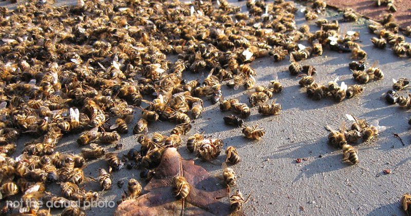 500 Million Bees Have Already Died In Brazil Within Three Months