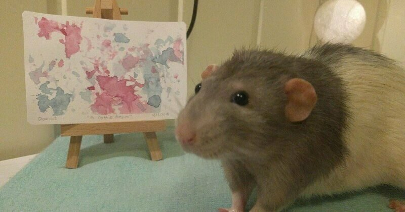 If You Haven't Smiled Today, Meet Darius, The Rat Who Was Taught To Paint