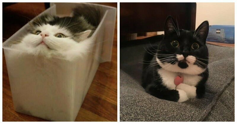 21 Reasons Cats Are The Most Superior Beings On The Planet