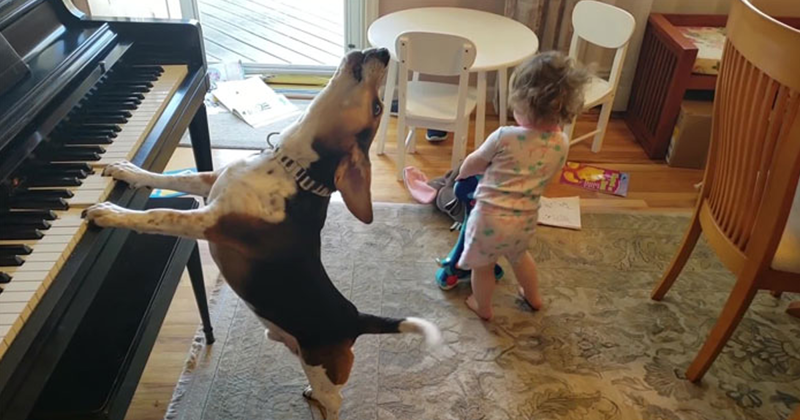 Video Of a Toddler Dancing To a piano-playing Dog Is Going Viral