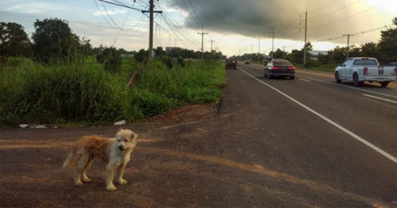 Dog Waits 4 Years In The Same Spot Near The Road, Finally Gets Reunited With His Family